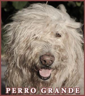 Perro Grande Music Album